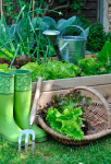 ambiance-potager-salade-Fotolia_74016318_Subscription_XL_m.jpg